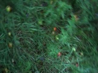 그녀의 알파에 썩은 사과를 짓밟는 벨라스