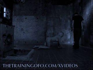 노예 훈련