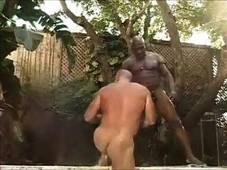 큰 검은 거시기에 의해 좆 된 근육 곰