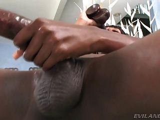 거대한 수탉과 배고픈 엉덩이와 블랙 시암