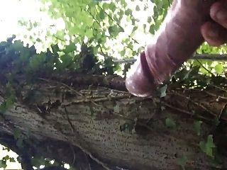 숲에있는 큰 수탉 정액