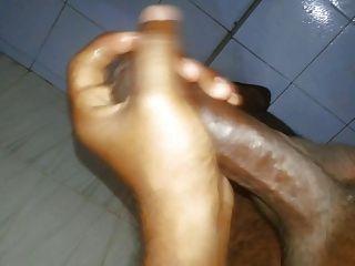 스리랑카 수탉 자위