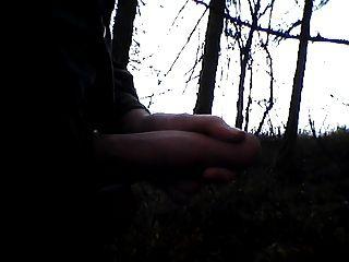 나무의 저, ich im wald
