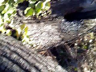 숲속에서 윙크 ... 좋은 입맞춤과 함께