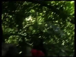 나무에 아프리카 몇입니다.